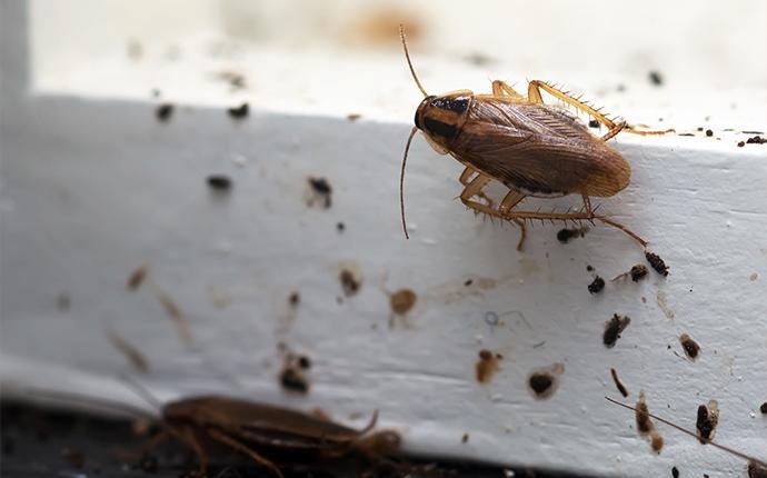cockroaches on baseboard