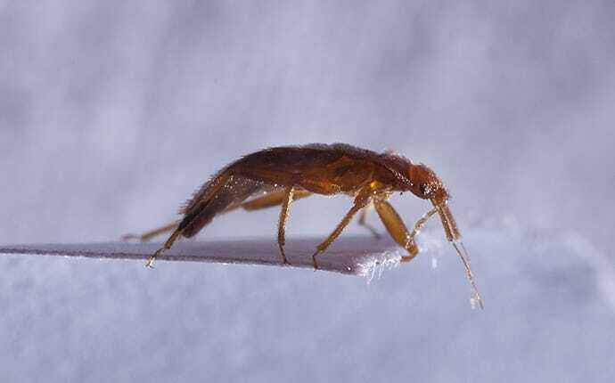 bed bug crawling on paper