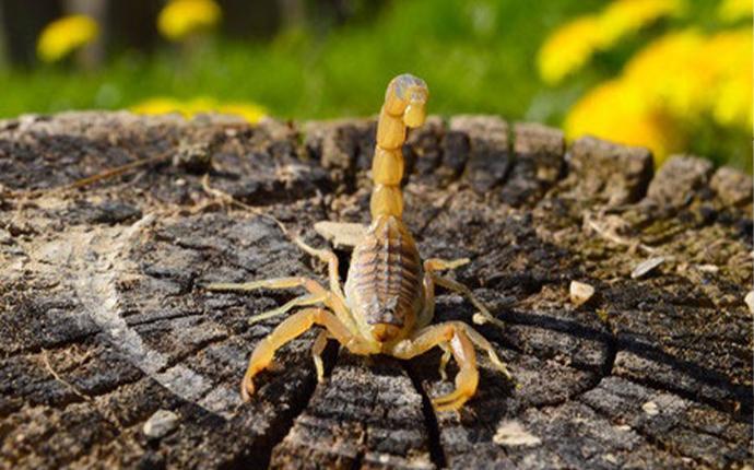 scorpion on a tree stump
