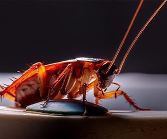 cockroach on a spoon