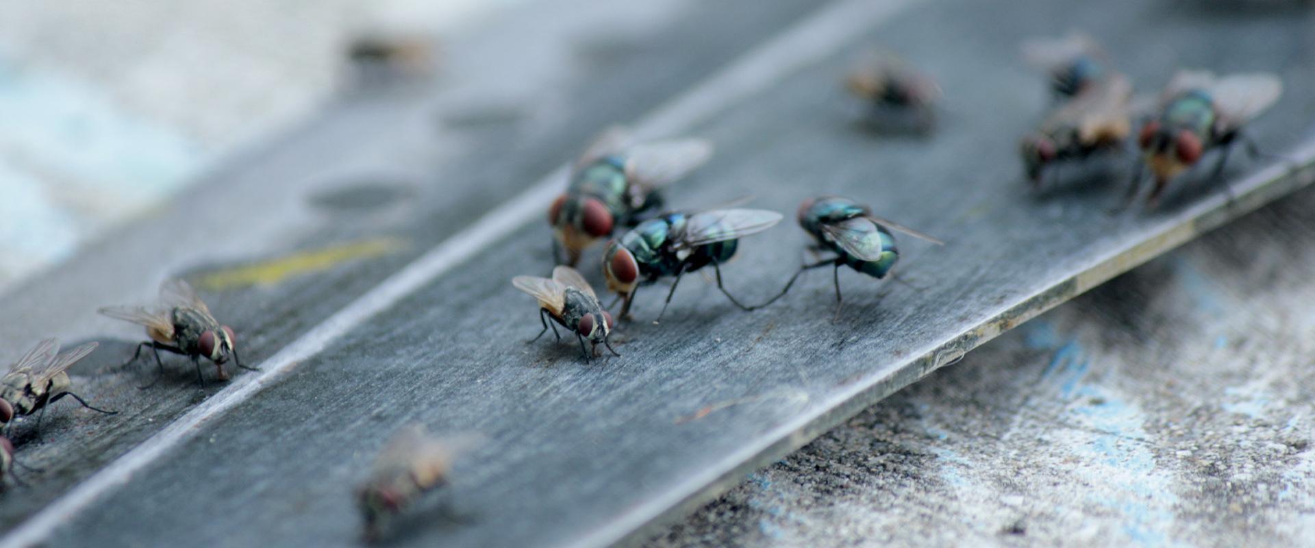 flies on metal
