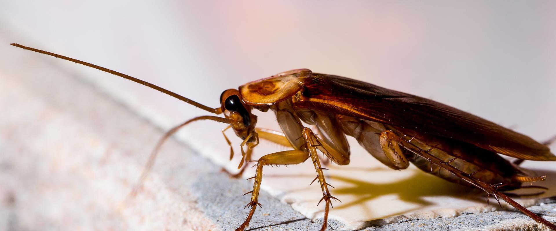 cockroach on tile