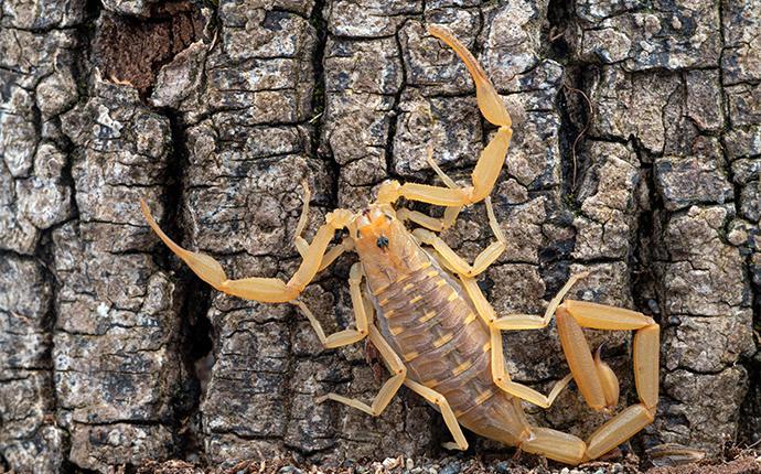 scorpion on a tree