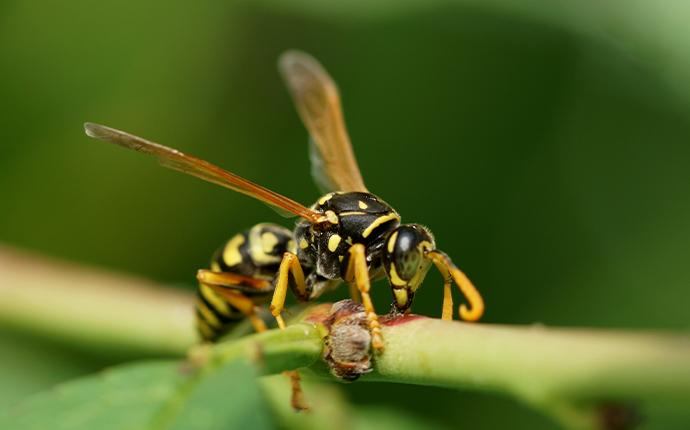 wasp on blade of grass