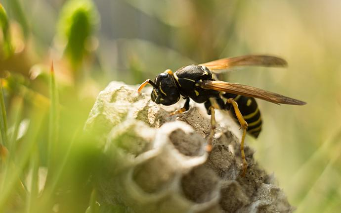 wasp on its hive