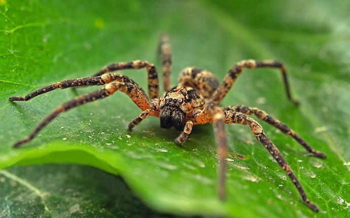 spider on a green leaf