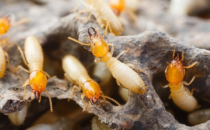 termites in their nest