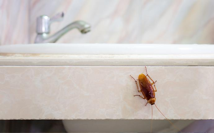 a  cockroach on the sink