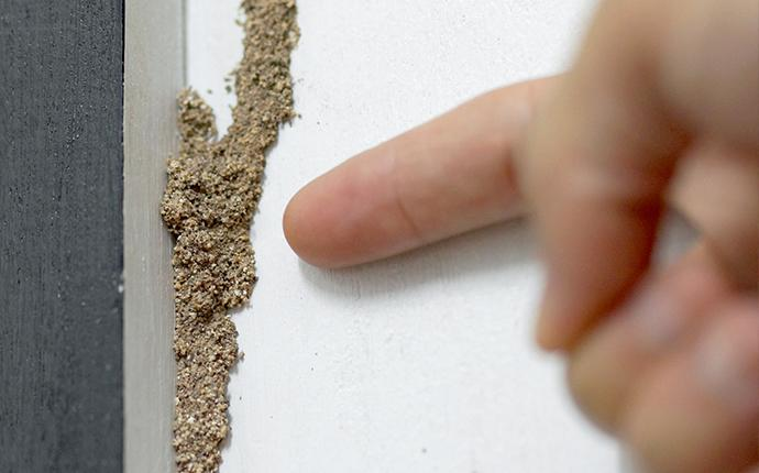 a  hand pointing to a termite nest