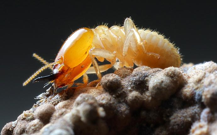 a termite resting on a mound