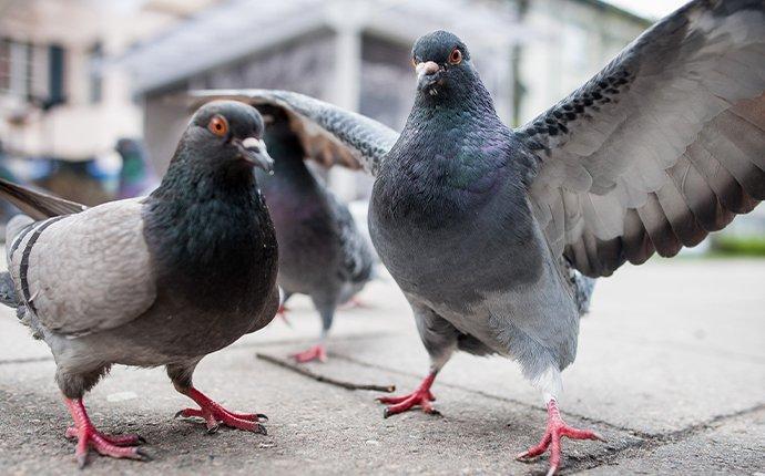 pigeons standing on a sidewalk