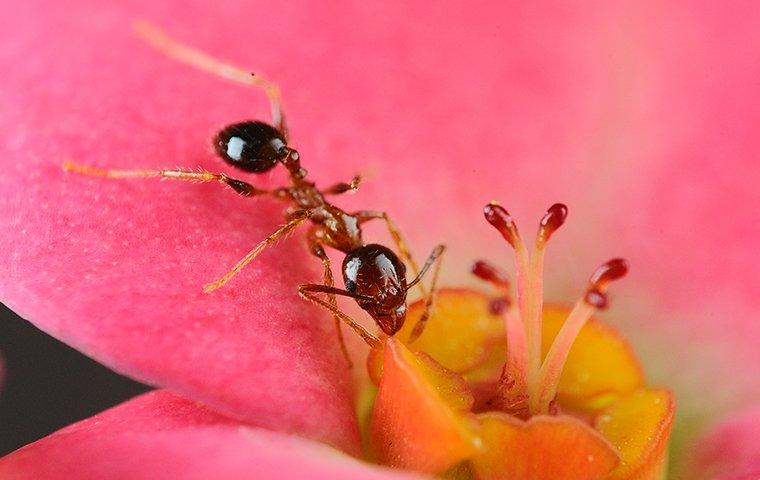 an ant crawling on a spring flower