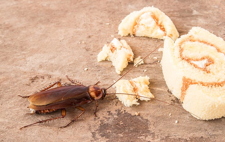 a cockroach eating food on the floor