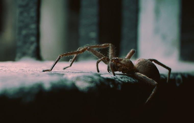 house spider crawling inside