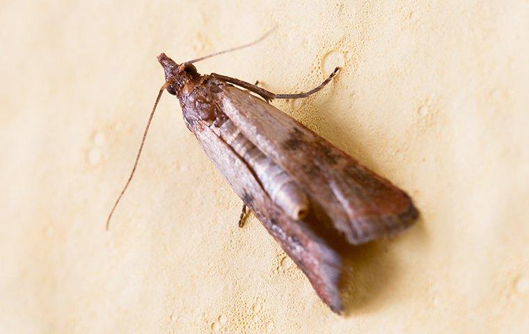 moth on the ground