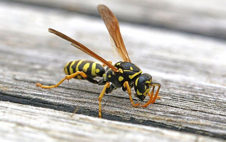 a paper wasp on a picnic table