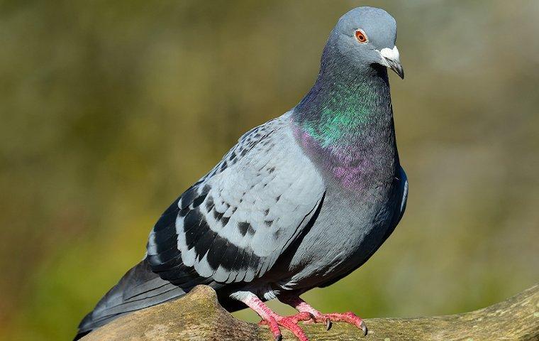 a pigeon perched on a tree limb