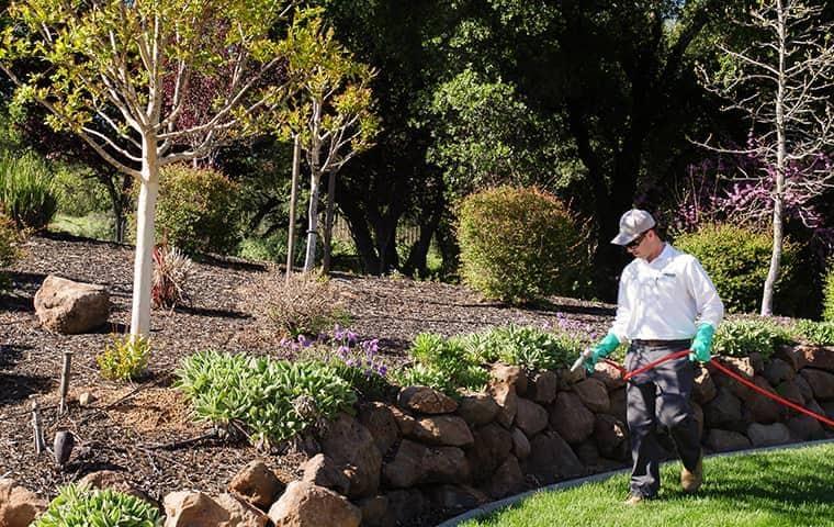 technician spraying a sacramento yard