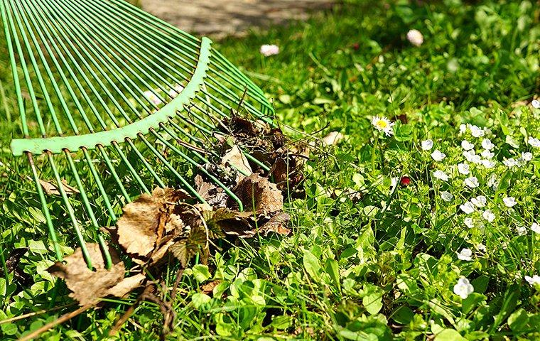 spring cleaning a yard to prevent pests