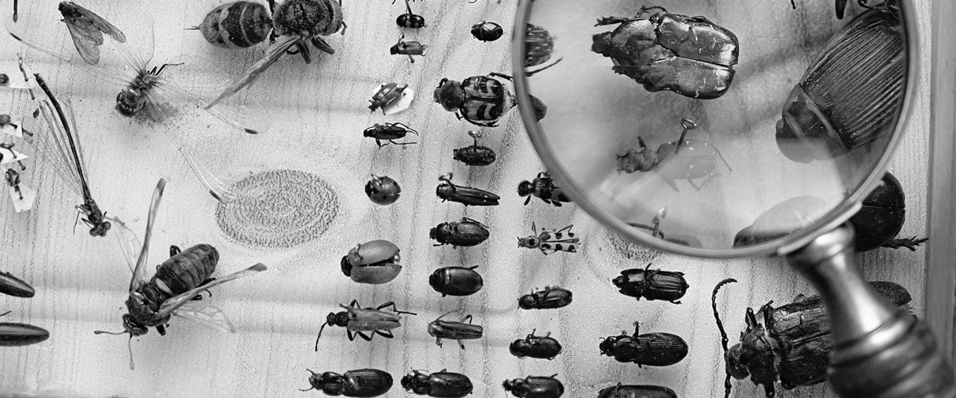 a magnifying glass looking at an insect display case in sacramento