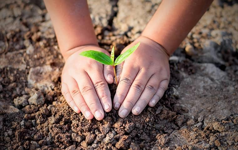 a childs hands putting a plant into the ground on a california property