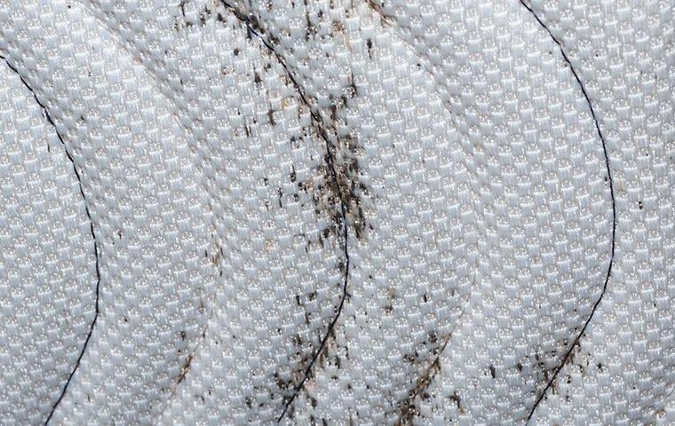 bed bug signs on a mattress