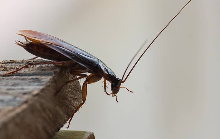 a cockroach on the corner of a table
