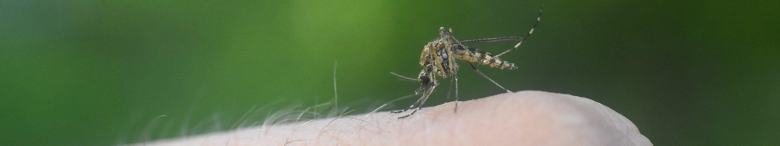 a mosquito biting a mans finger