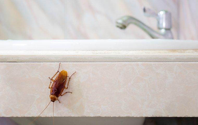 a cockroach crawling on the side of a sink