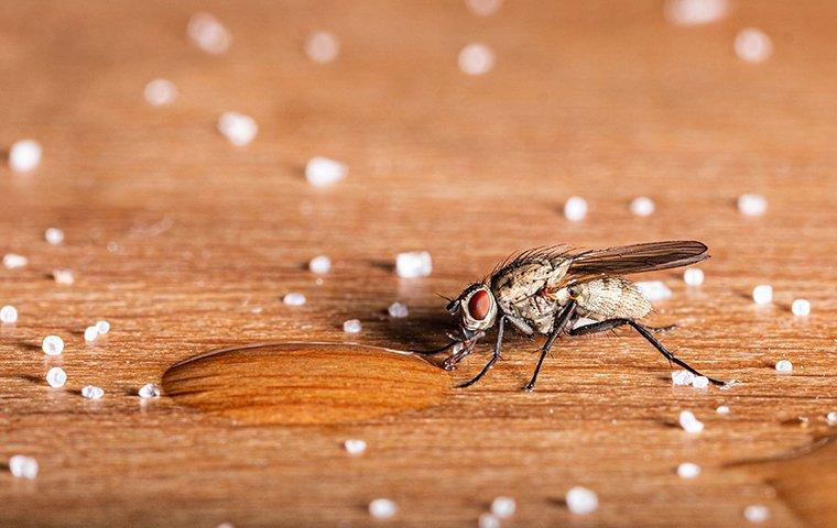 a house fly on a dining room table