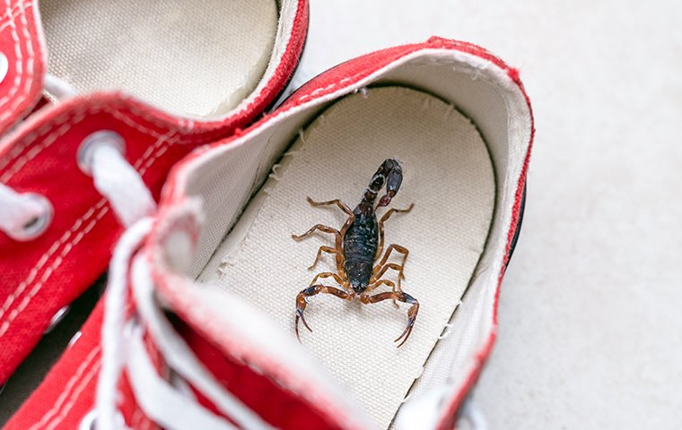 a scorpion in a sneaker