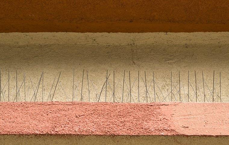 bird spikes used for pigeon proofing homes