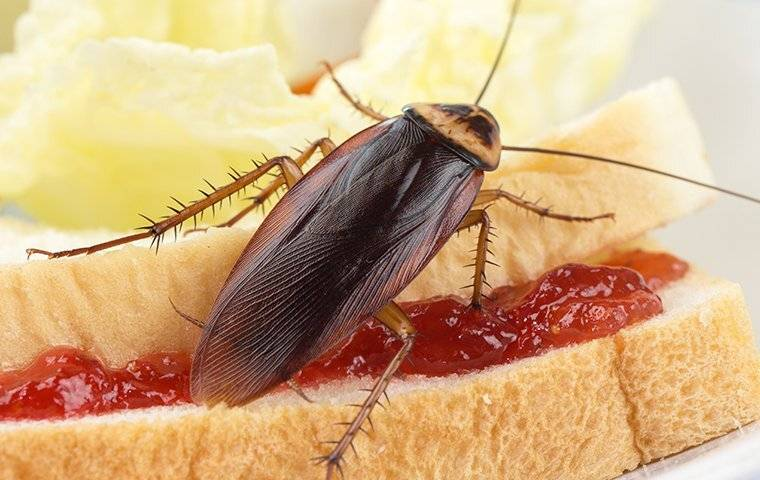 cockroach eating a sandwich