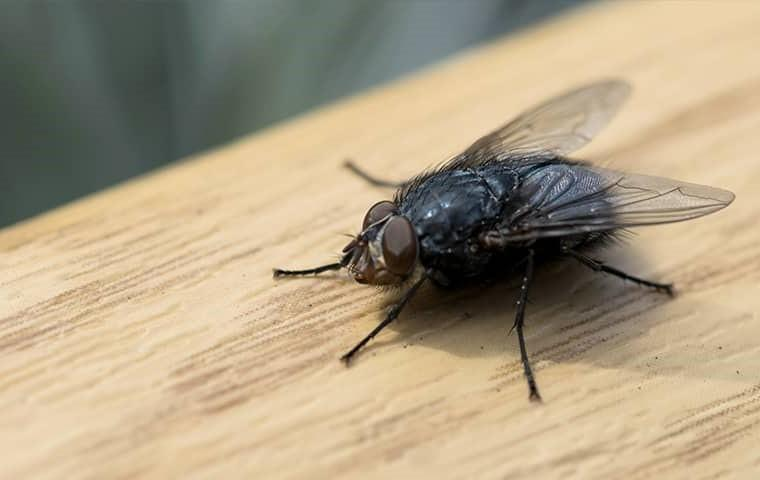 a fly on wood
