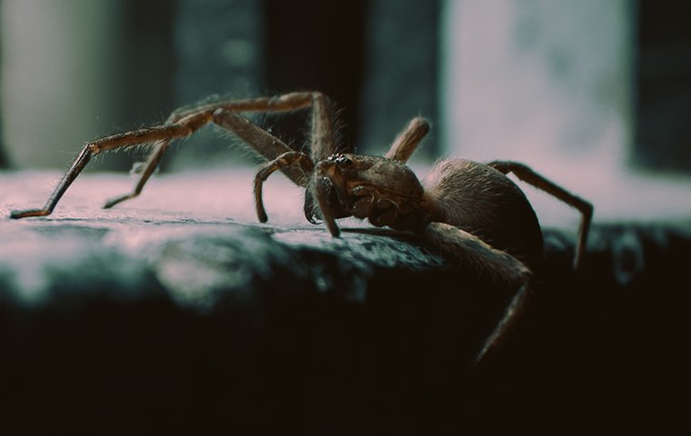a spider coming into a home