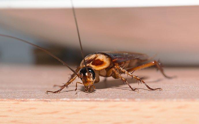 cockroach on table