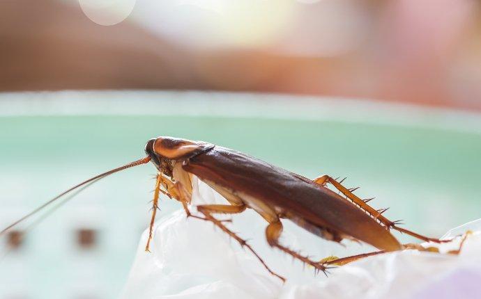 cockroach in kitchen sink