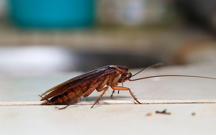 cockroach in a kitchen