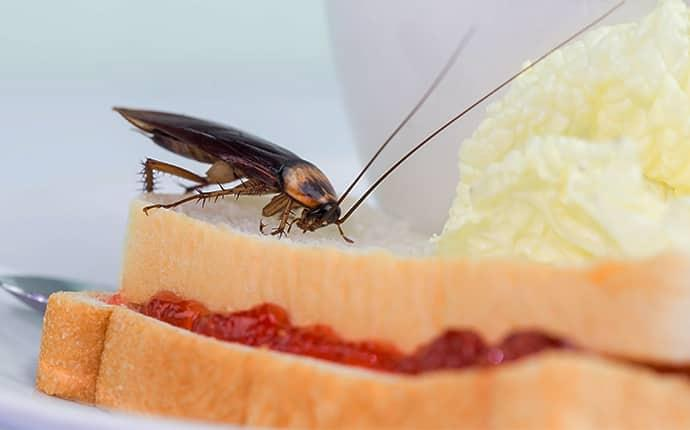 a cockroach crawling on a sandwich in a cary kitchen