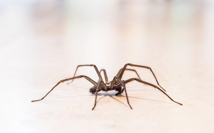 a house spider crawling on a floor in wake forest