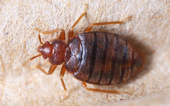 a bed bug on a boxspring