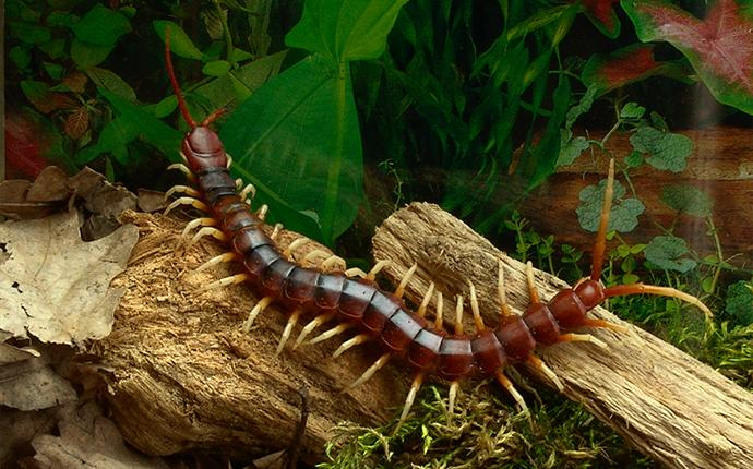 a centipede on a wood