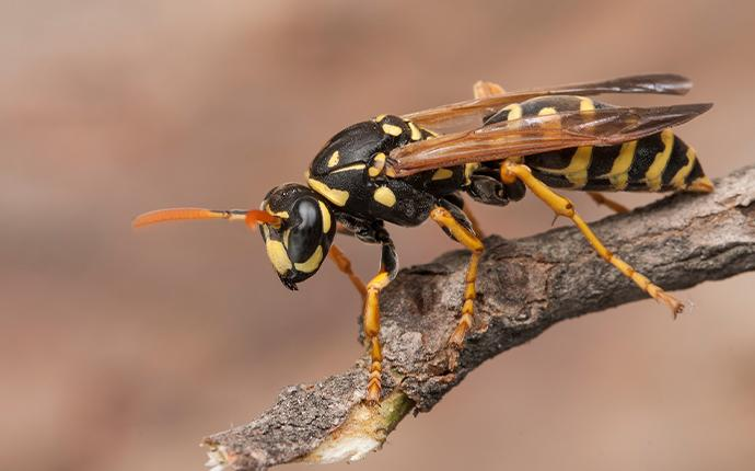 a wasp on a branch
