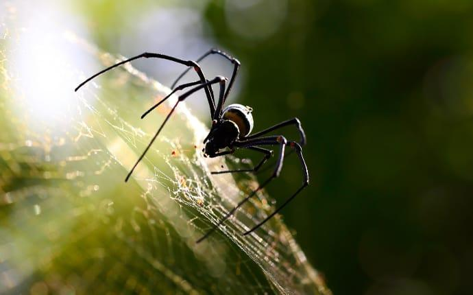 a spider crawling on a web in cadillac maine