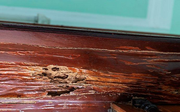 termite damage in a wooden door frame in cary north carolina