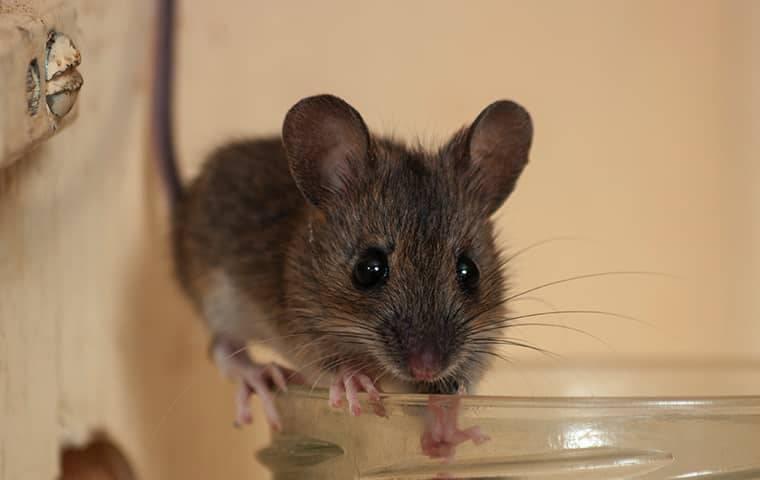 a mouse on a jar