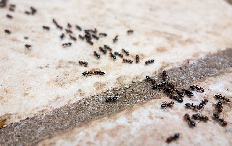 ants in a line on a tile floor