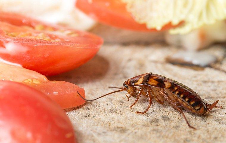 cockroach crawling near food