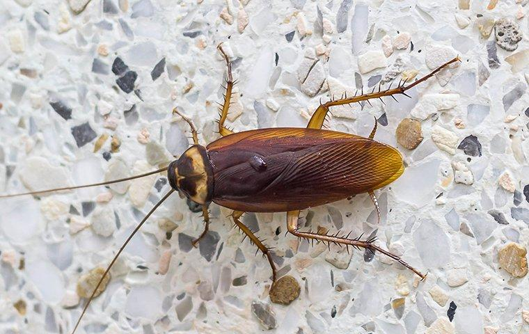 a cockroach crawling on a bathroom floor