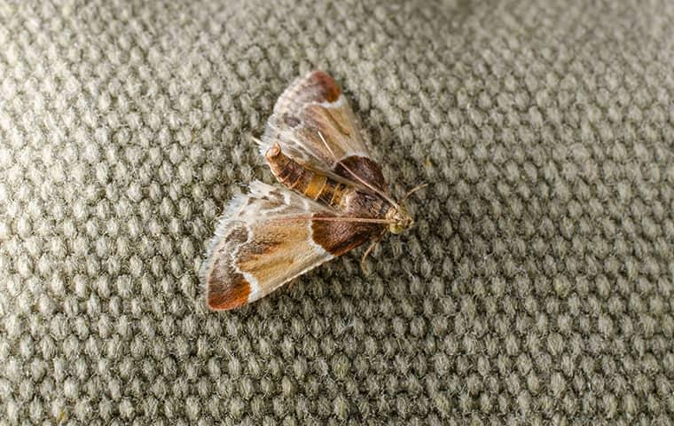a moth on a persons coat in delaware county pennsylvania